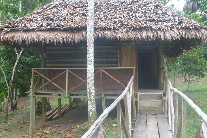 The Jungle Room Ayahuasca Retreat