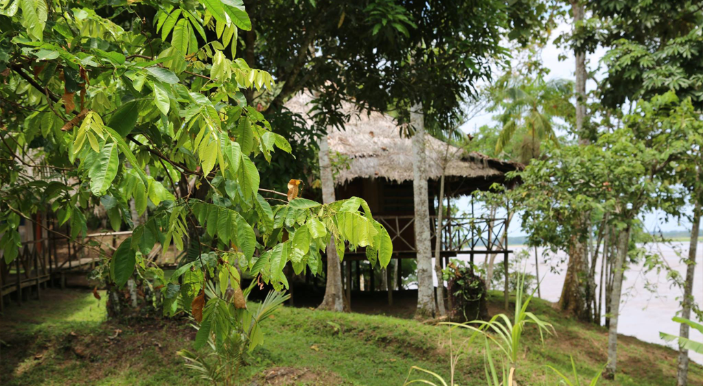 The Riverview Room King of Compassion Resorts Iquitos Peru Ayahuasca