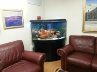 Fish Tank in Living Room - Bing images