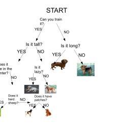 Tree Diagram Game Paper Origami Turtle Branching Database Blogs At Kings Road Primary School