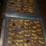 Dried peaches on dehydrator shelves