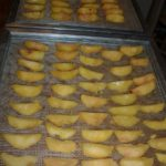 Fresh peach slices on dehydrator shelves