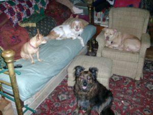 Instant Dog Pack - Sept 30 - 2014