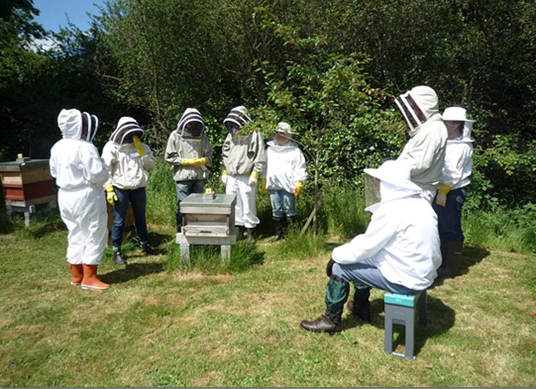 Club members at the apiary