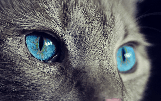 The M25 killer: Why is someone killing cats all over London?
