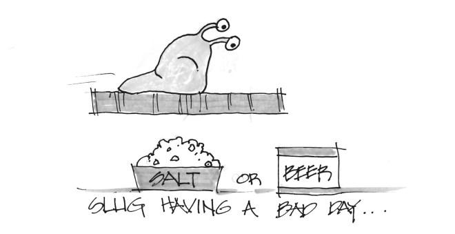 Slug having a bad day....