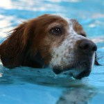 First-Ever Doggie Dip at Tomlinson Aqua Park