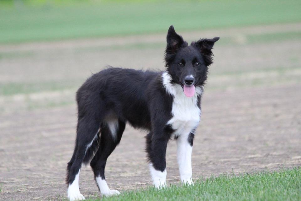 Arya 4.5 months