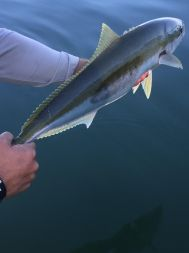 Gareth AKA Trout Hunting NZ with his first salt fly caught kingfish.