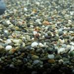金魚には大磯砂が最も良いと言われている件