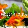 人気のペットランキング 魚が堂々の第2位!!