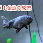 夏休みも終わり 金魚の放流はダメだよ!