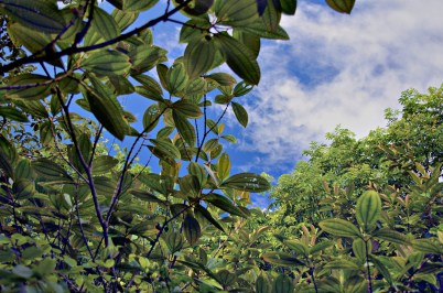 blue sky, rainforest