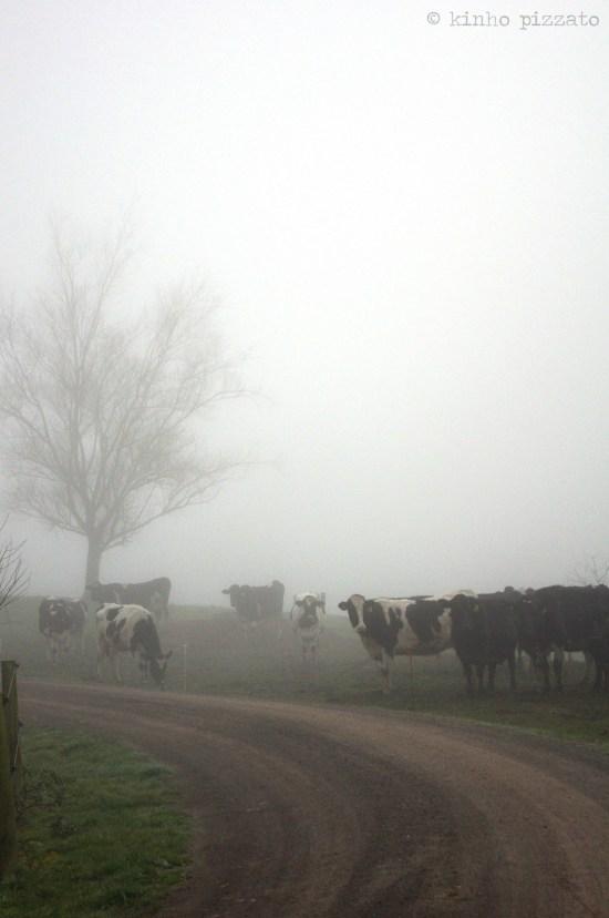 cold morning in wai-o-tapu