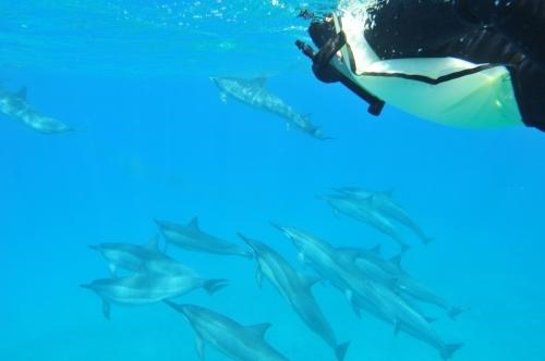 Aloha de Dolphin(名門イルカ大学)