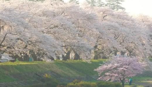 関東で桜のトンネルを見られるスポット21選!2018開花予想あり!