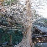 日本三大金運神社  安房神社に行ってきました。