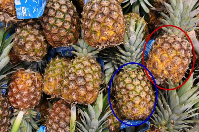 パイナップル熟度比較