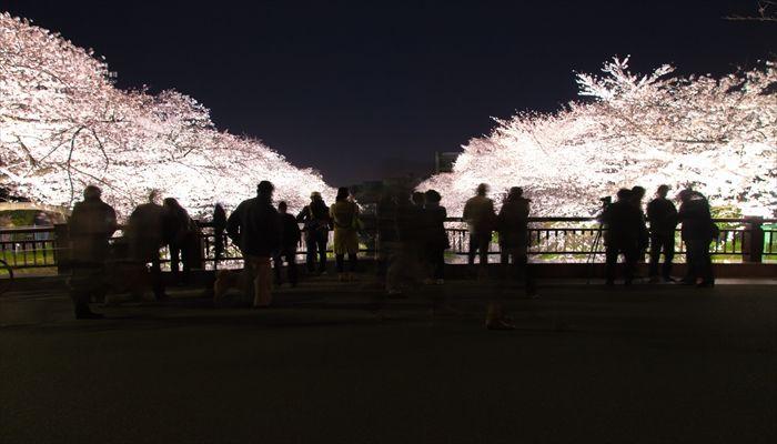 夜桜 服装 失敗談