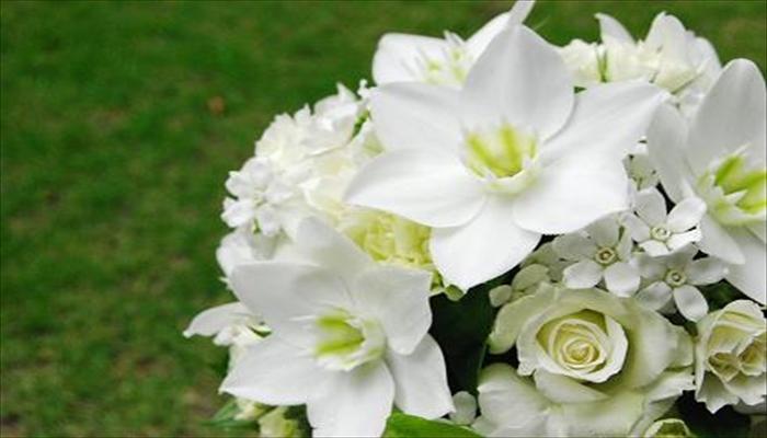 ジューンブライド 花 ユーチャリス