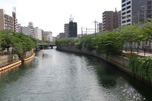 近くの自然 大岡川