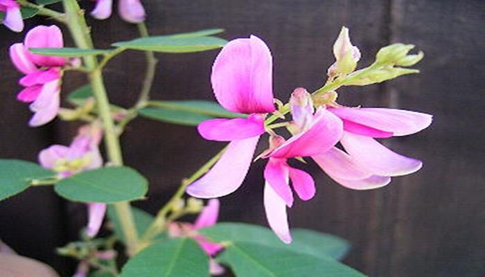 おはぎとぼた餅の呼び名 萩の花