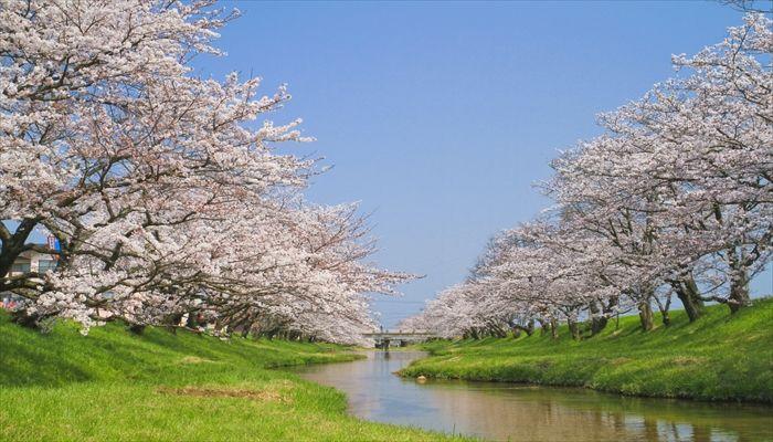 春にすること 春にしたいこと 春の遊び お花見