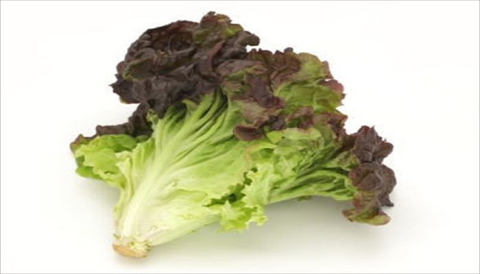 葉野菜 保存 レタス