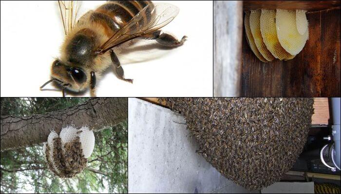 ミツバチの巣 見分け方