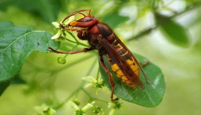 スズメバチ 巣 駆除方法