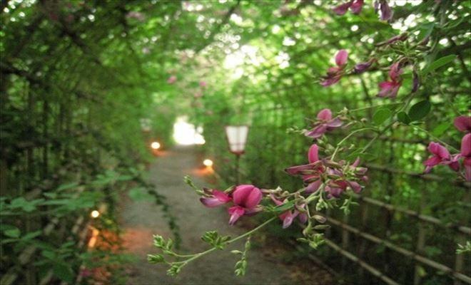 十五夜祭り 向島百花園 月見の会