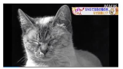NHK「ニュースほっと関西」3