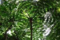RainForests   Facts For Kids, Wild Life & Nature  Kinooze