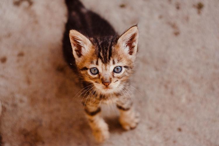 Kedi hastalık sırasında tükürük var