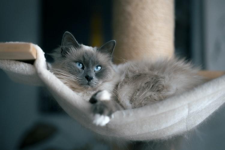แมว purring ที่มีประโยชน์สำหรับผู้ชายคืออะไร