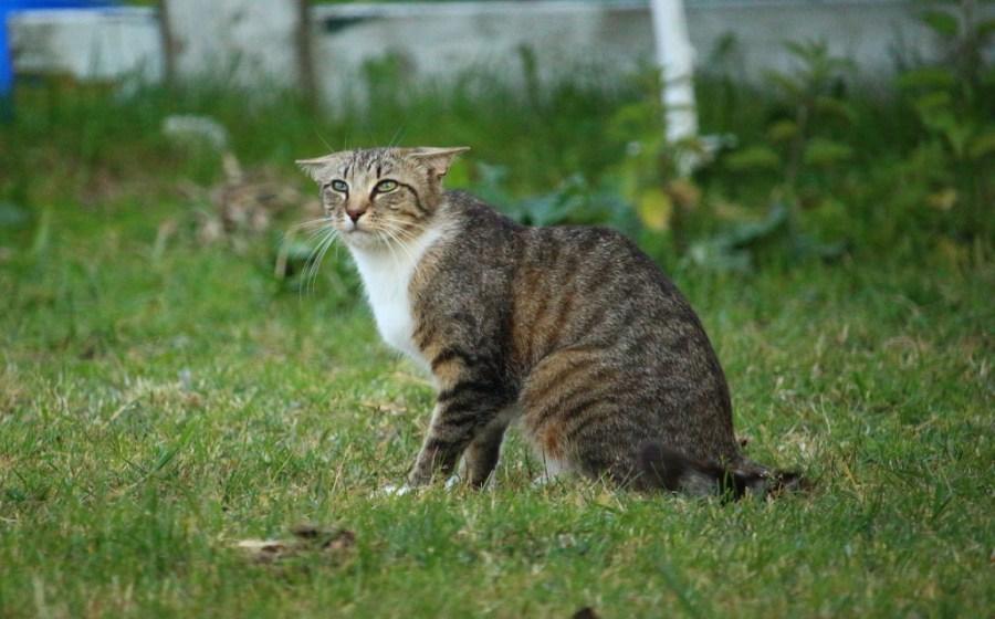 Kapan kucing harus dibius?
