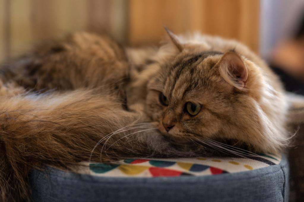Vómitos en gatos con piezas de comida.