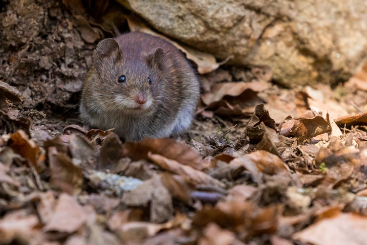Dangerous Diseases That Rodents Like Rats and Mice Carry - KIPC Blog