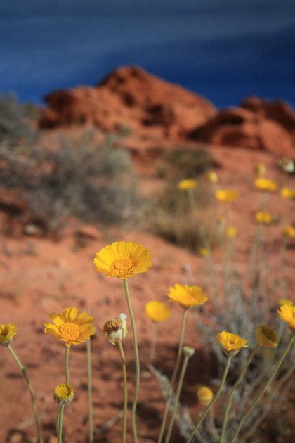 Valley of Fire - 023
