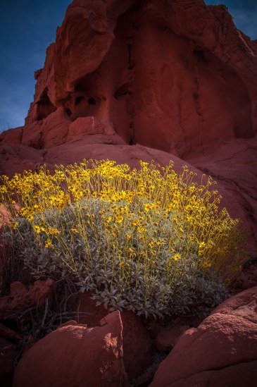 Valley of Fire - 032