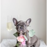 Dc Lifestyle Shoot Puppy Announcement Photos Cale And Lori Kir2ben Com