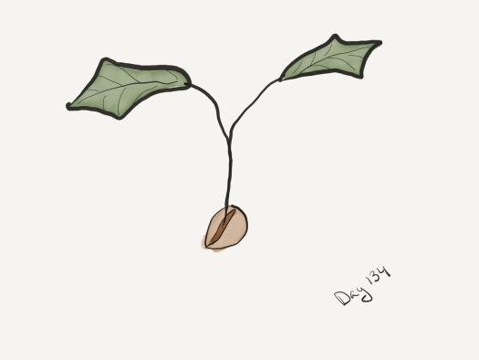 watercolor of a seedling emerging from a seed. It has two large oak-like leaves on a twig-thick stem.