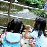[無料]大宮公園小動物園に行ってきました♪ふれあいコーナーや公園はどんな感じ?