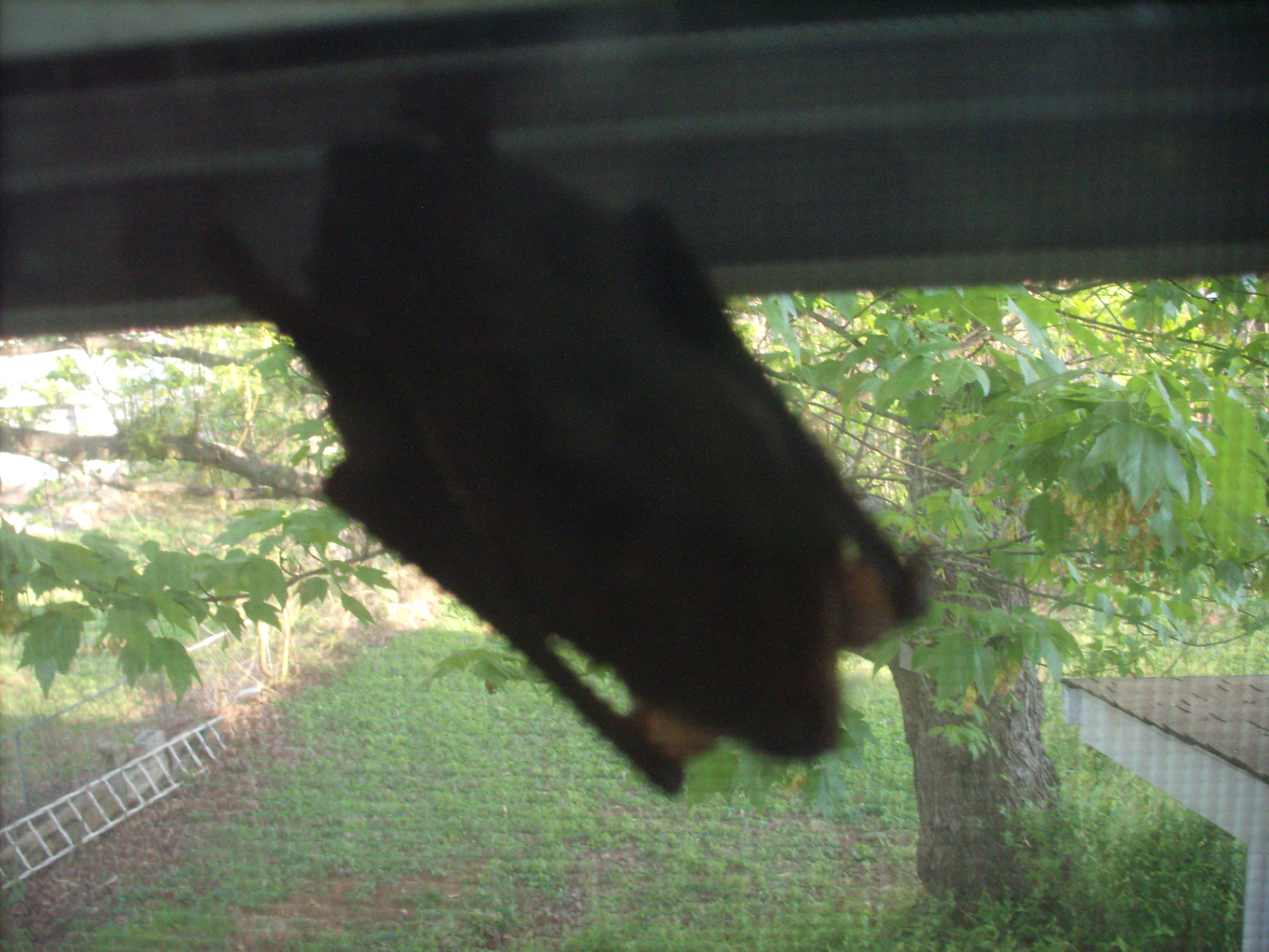 a bat hung out in the shrine room window for several weeks