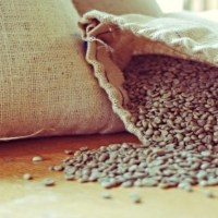 Arabica Coffee prices hits a two year high