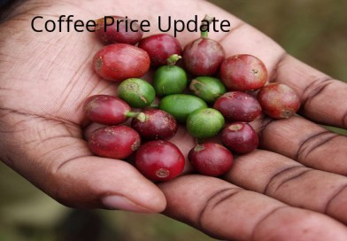 Coffee Prices (Karnataka) on 21-08-2019