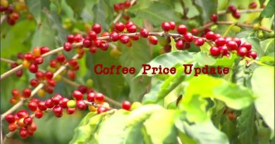 Coffee Prices (Karnataka) on 20-09-2019