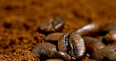 Arabica coffee fell to a fresh 13-year low due to excess supplies