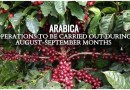 ARABICA:OPERATIONS TO BE CARRIED OUT DURING AUGUST-SEPTEMBER MONTHS