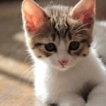 猫のびダイエット方法のやり方!超簡単ポーズ【林先生が驚く初耳学】